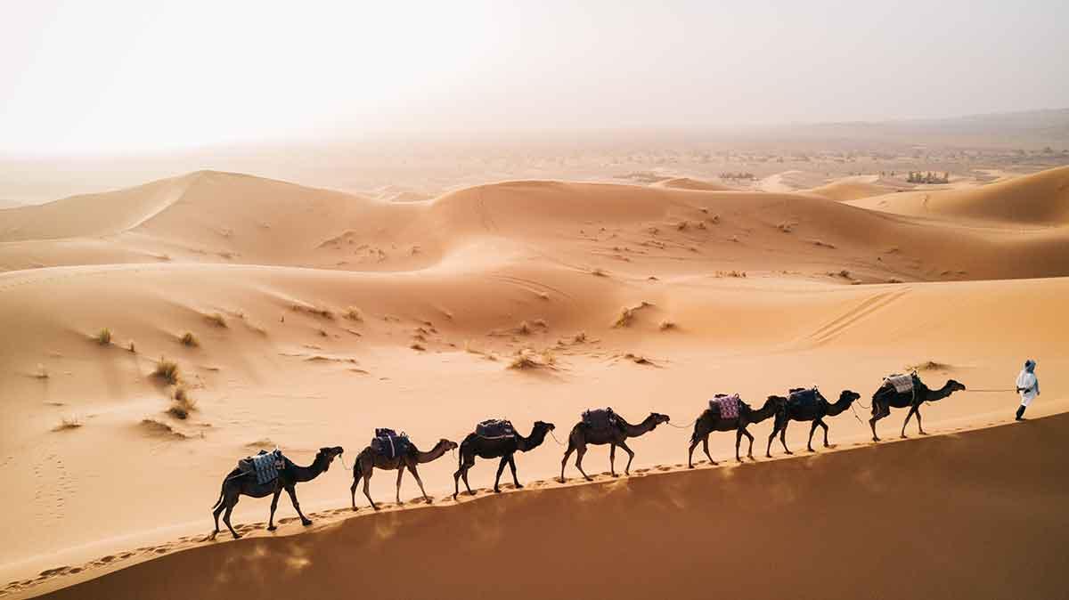 Caravana de dromedarios en el desierto de Merzouga