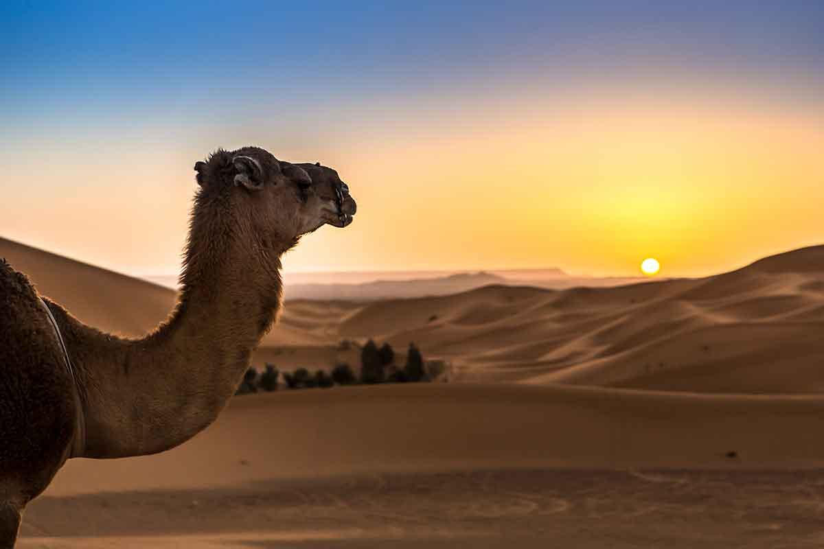 Montar en camello en el desierto