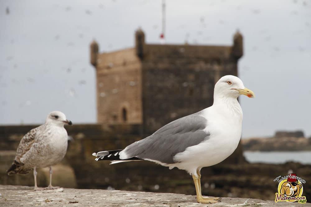 Fortaleza portuguesa de Essaouira