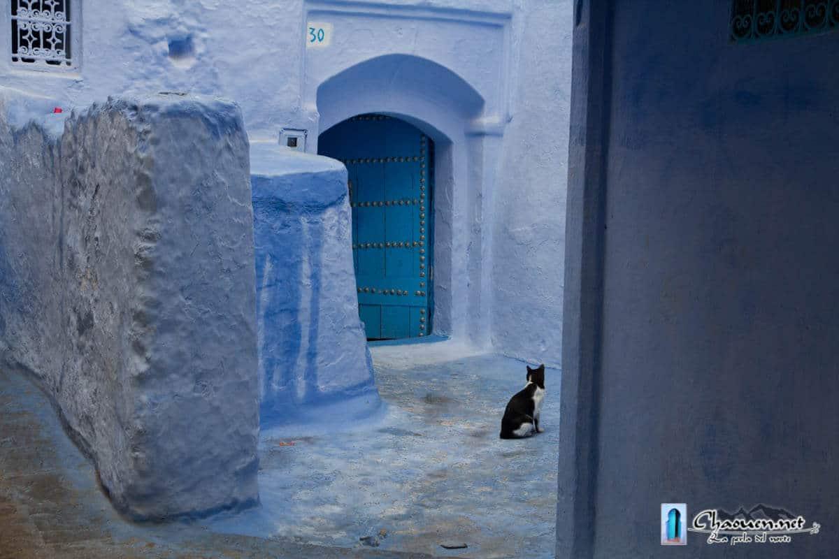 Gato y calles azules en la medina de Chaouen